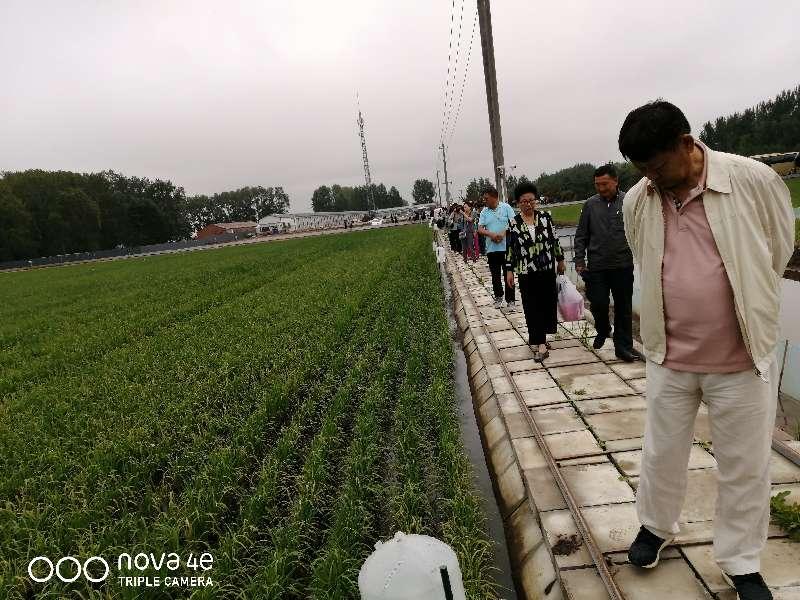 梧桐河农场-1110228412