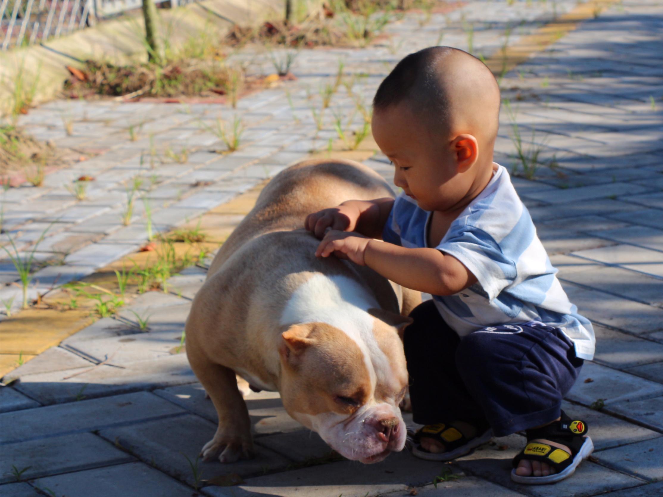 恶霸犬-与小孩