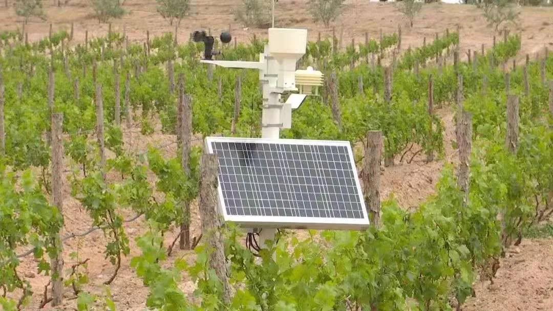 国际媒体盛赞西鸽酒庄的葡萄酒数据运用,品质保障从种植做起-4