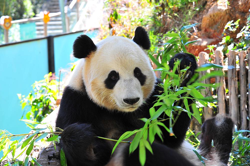云南野生动物园2