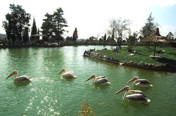 云南野生动物园3
