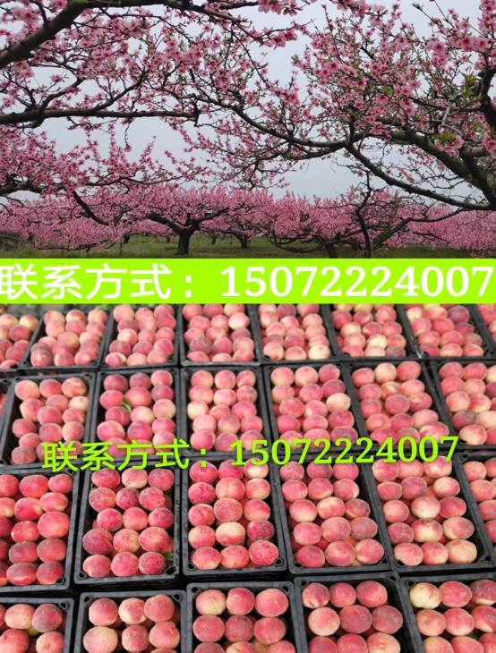 微信图片_20200501145328.jpg