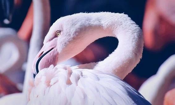 flamingo-4796081__340.webp