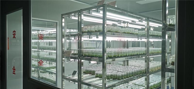 标本植物培养室