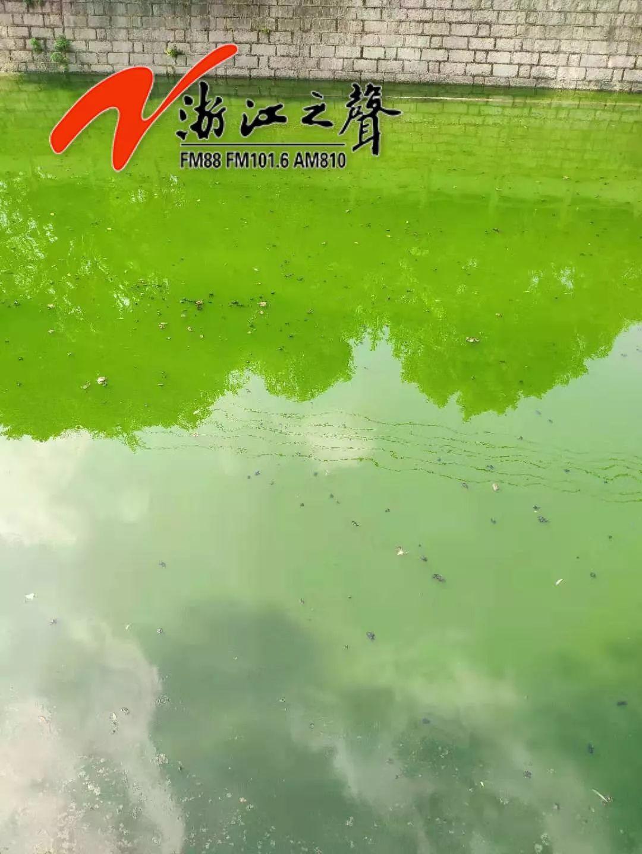 2太恶心!温州鹿城多河道水体出现黑臭反弹