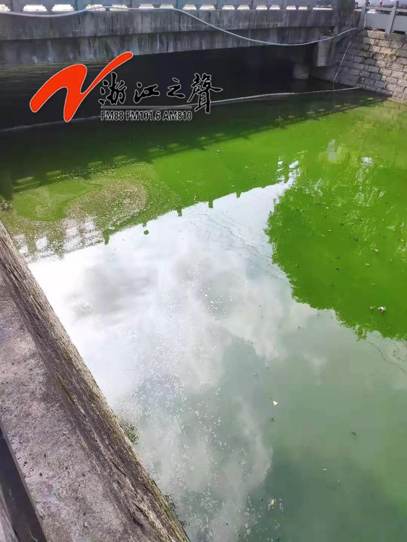 4太恶心!温州鹿城多河道水体出现黑臭反弹