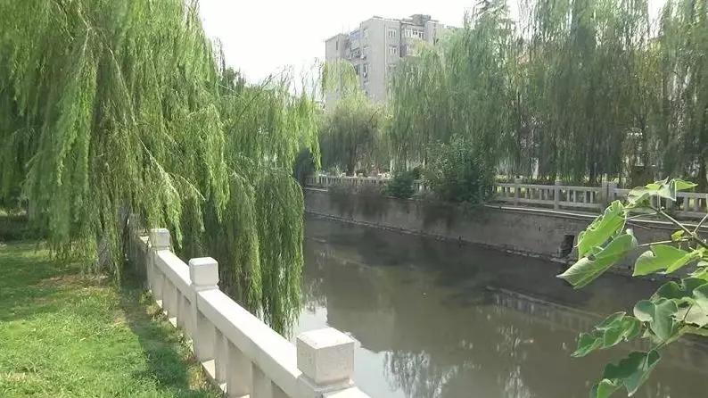 谁来管管?龙尾河变成臭水河,河面上还漂着死鱼2