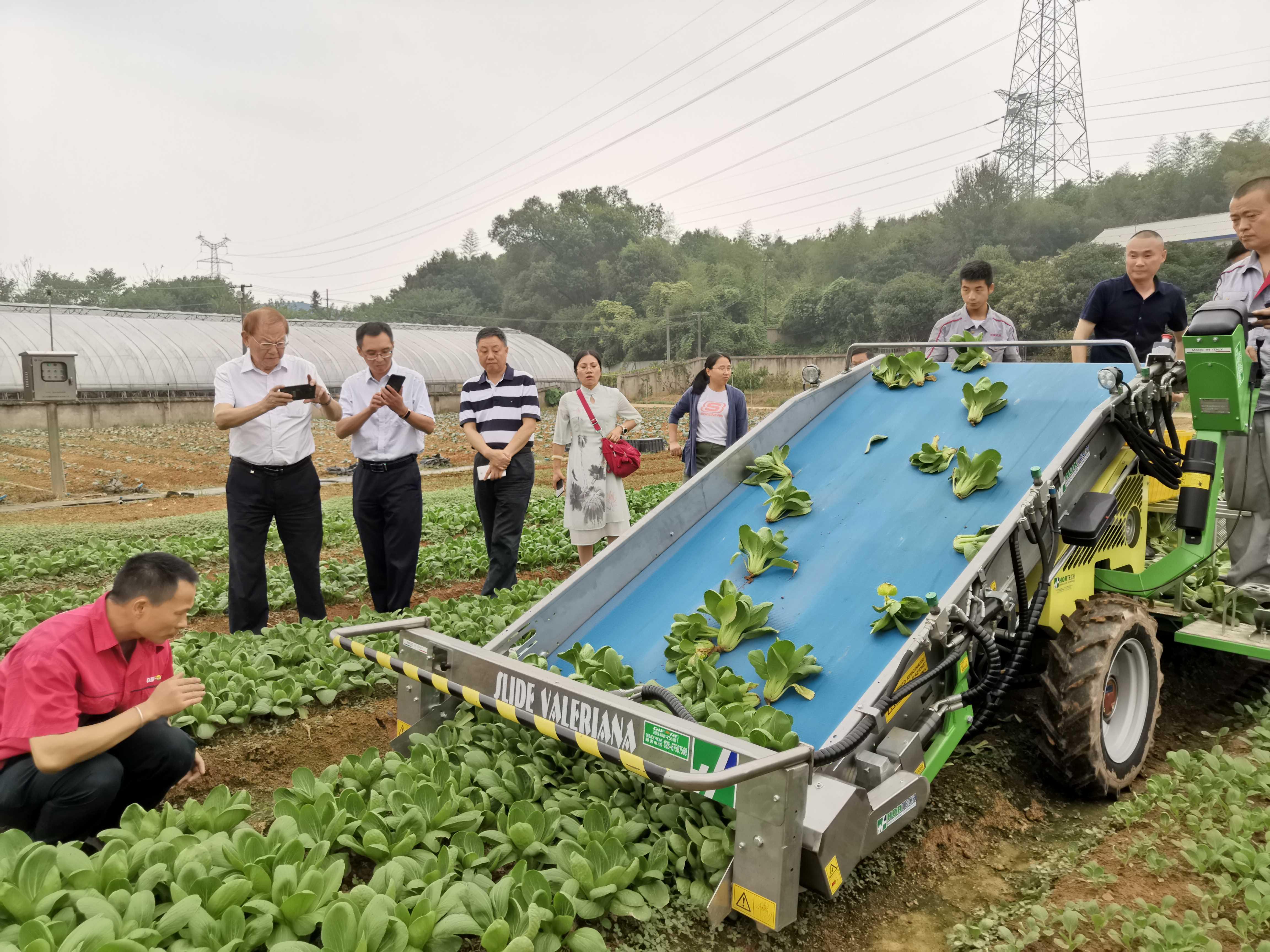 葉菜帶根收獲機-湖南