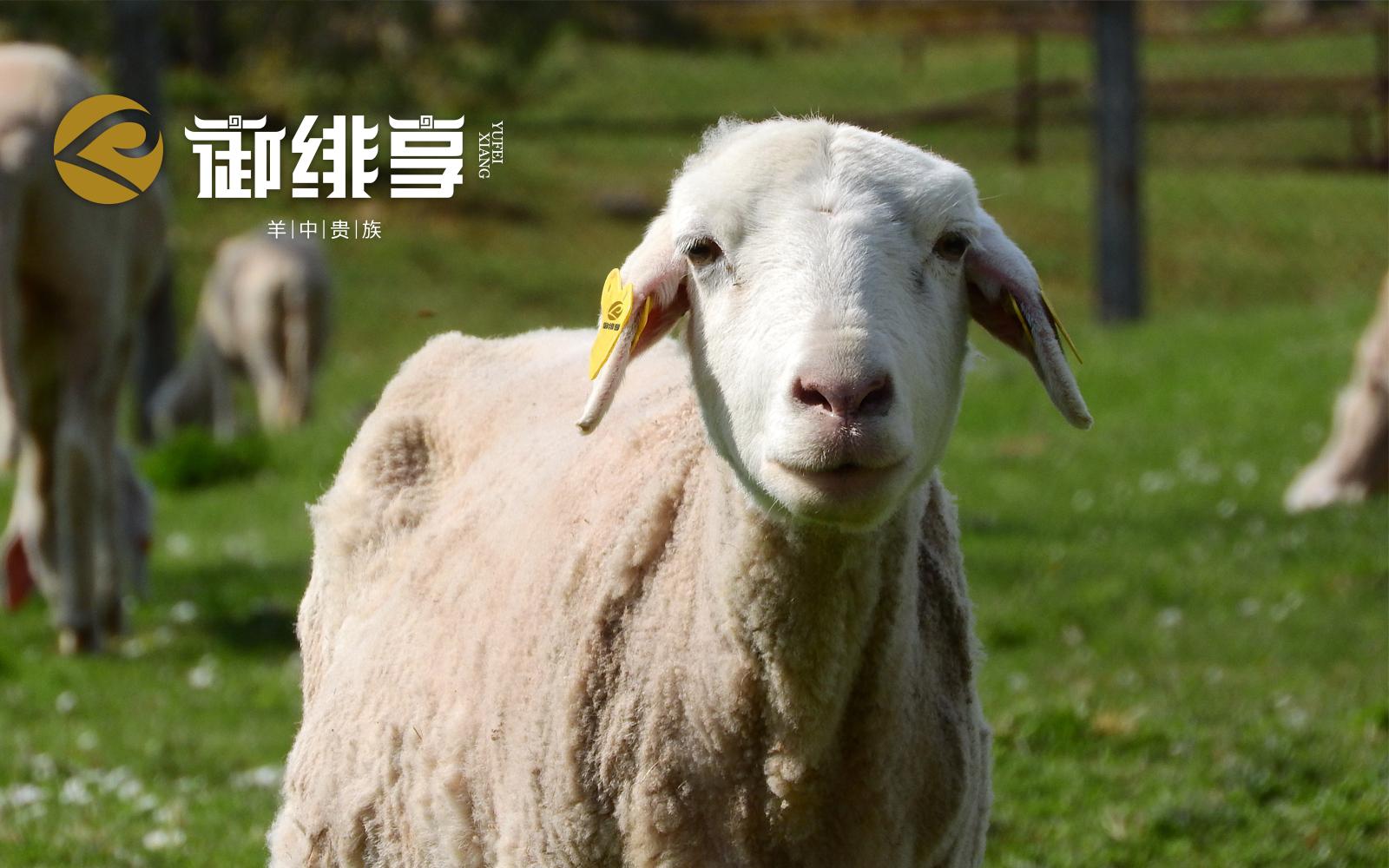 御绯享受羊肉品牌千赢国际app登录-3