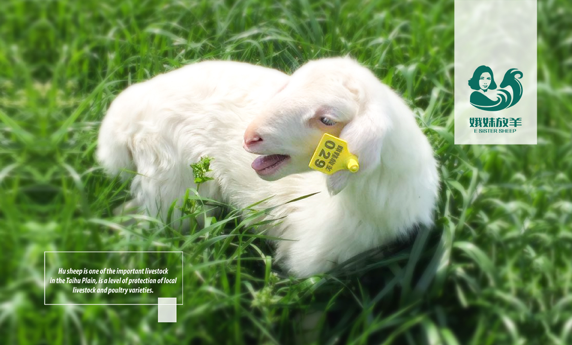 峨妹放羊食品LOGOVI设计-14