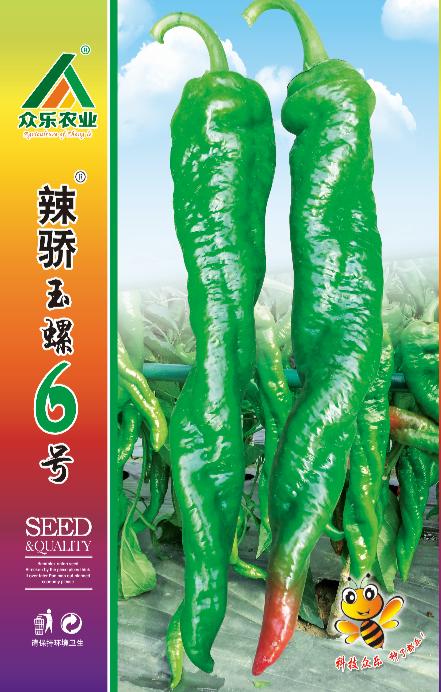 辣椒辣骄玉螺6号正