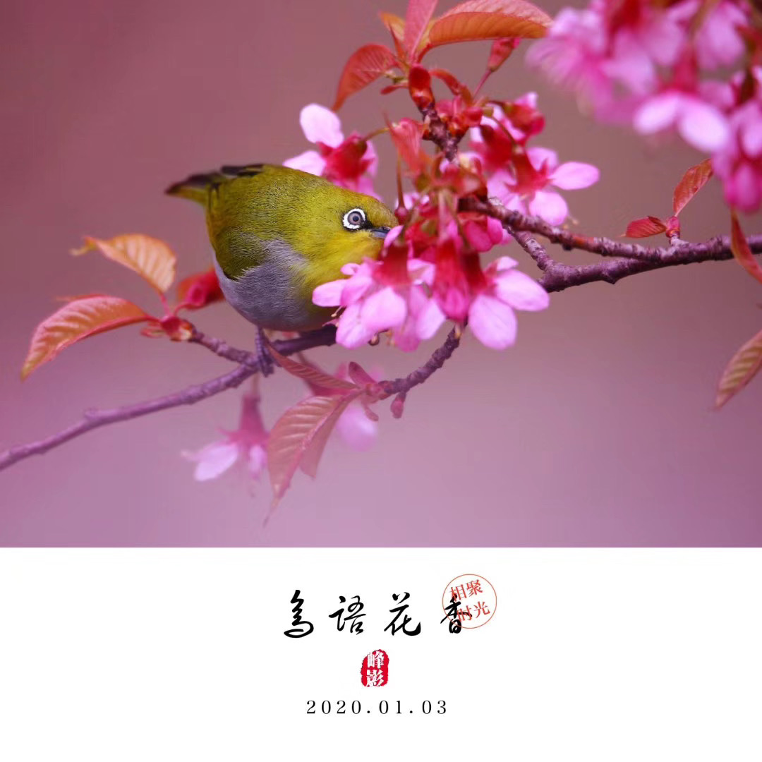 吳曉峰-微信圖片_20200117101032
