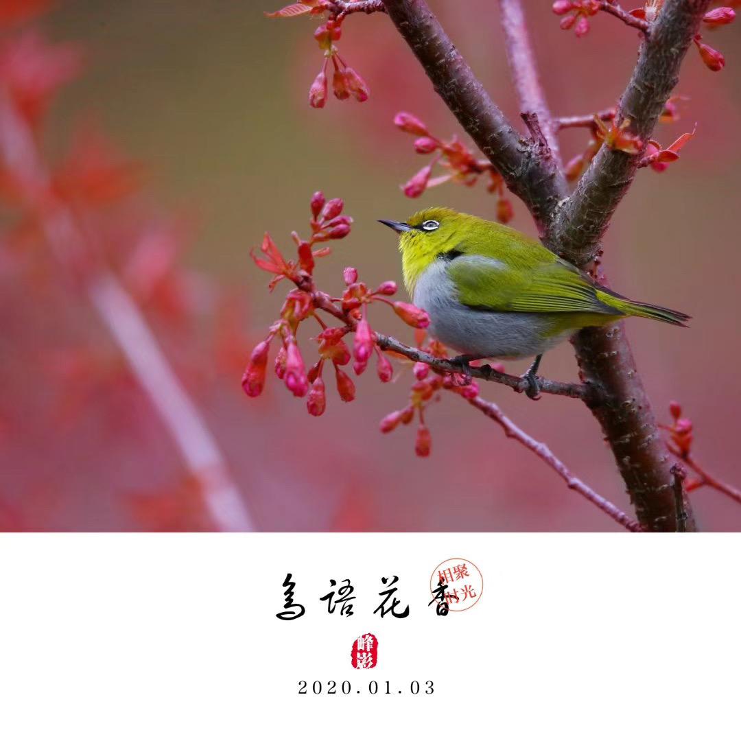 吳曉峰-微信圖片_20200117101039