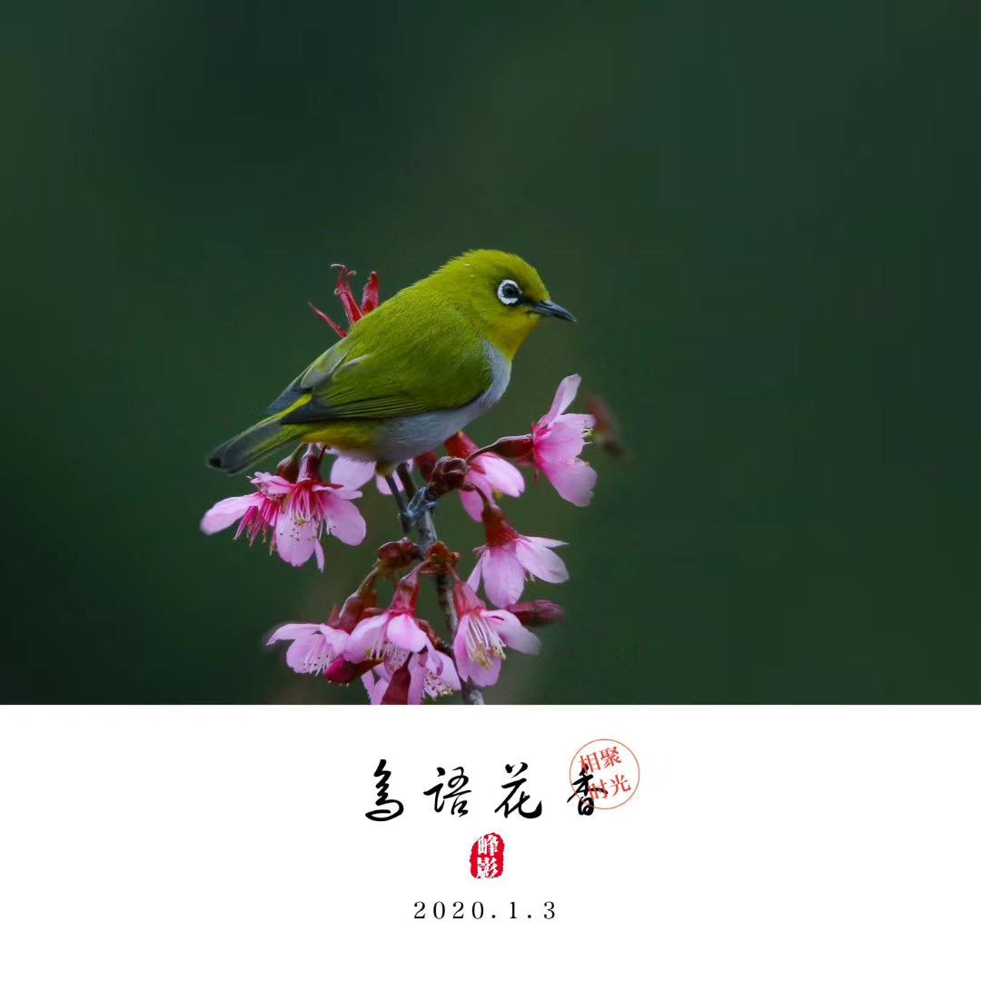 吴晓峰-微信图片_20200117101044