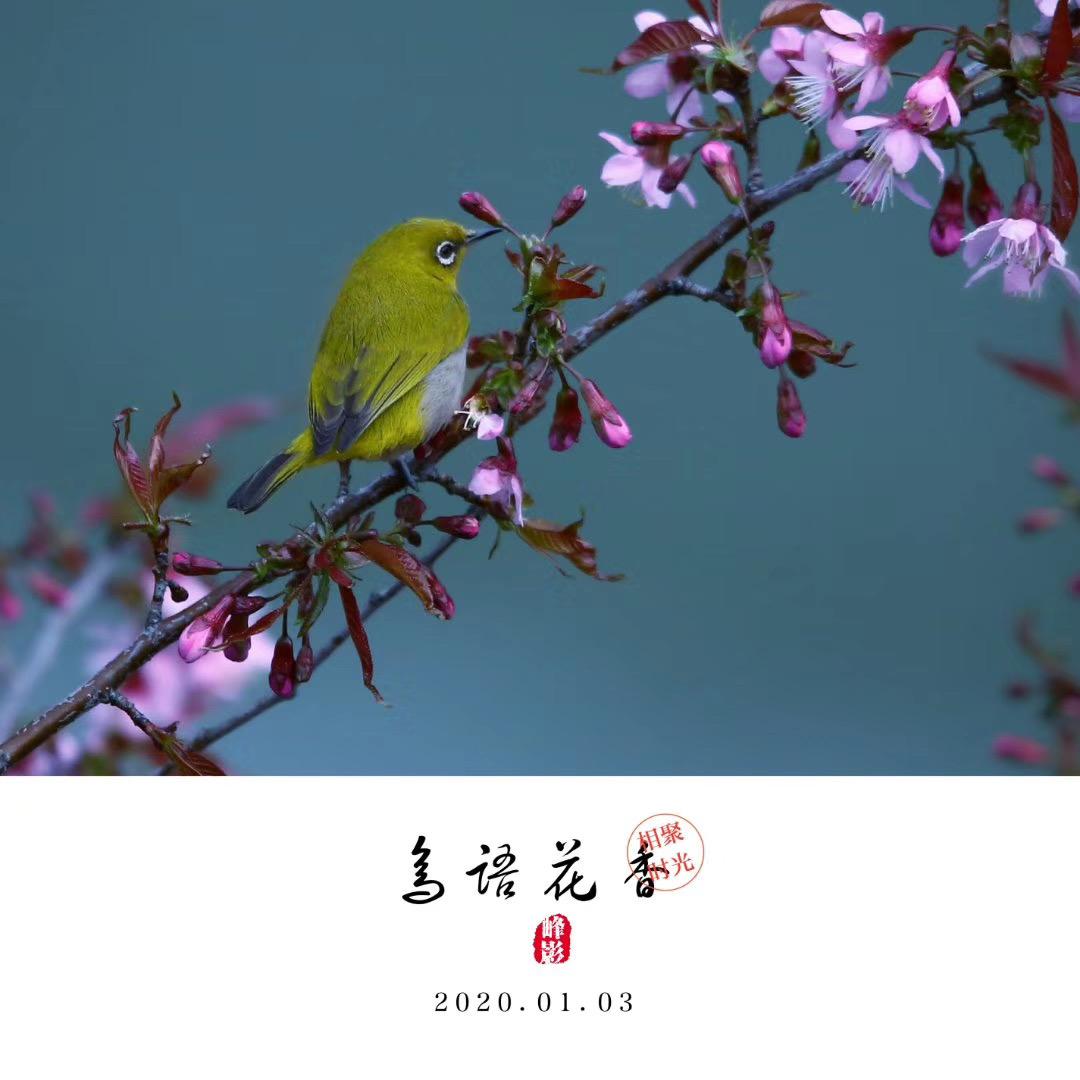 吳曉峰-微信圖片_20200117101053