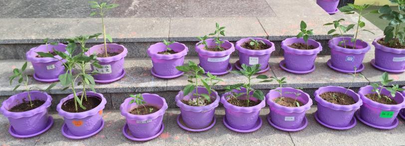 花儿长高了——亲子种植活动跟踪报道-U8@6-`HK9G14K0B-MP-O$U