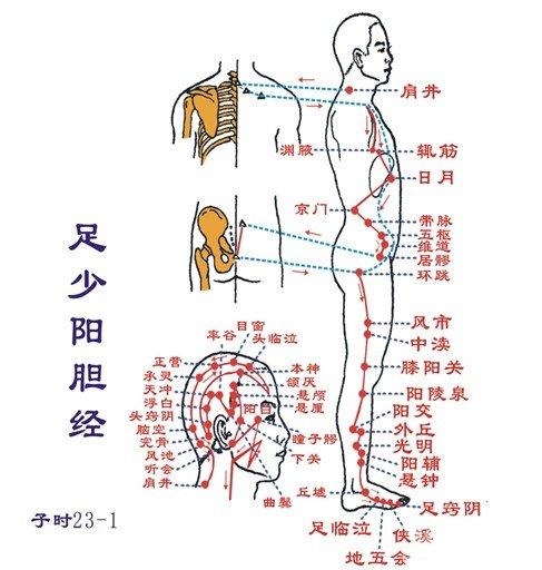 人体器官图
