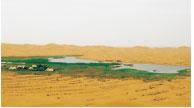 草地畜牧业